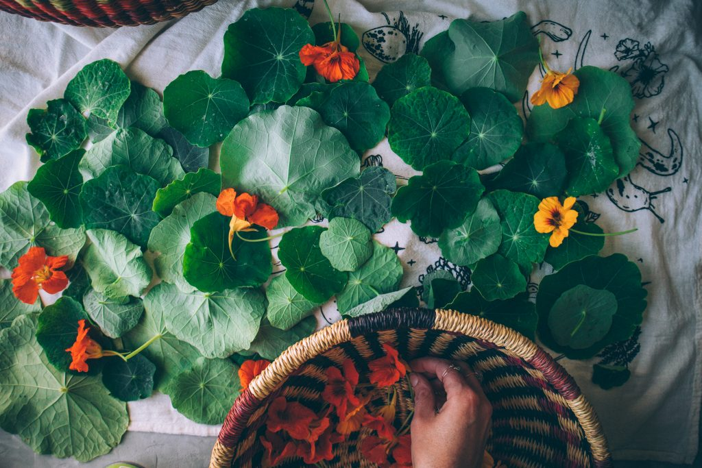 Letting the nasturtium leaves and flowers dry before using them.