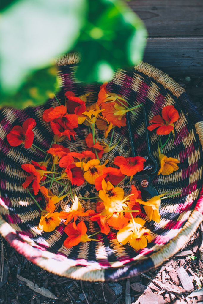 My basket filled with edible nasturtium flowers.
