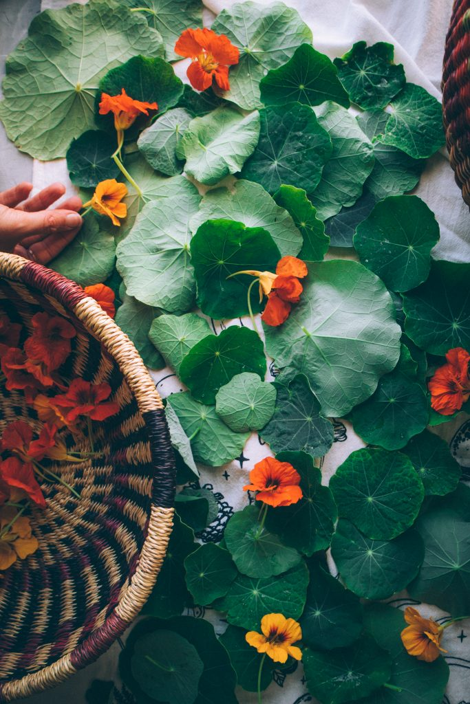 Nasturtium leaves and flowers drying after being washed.